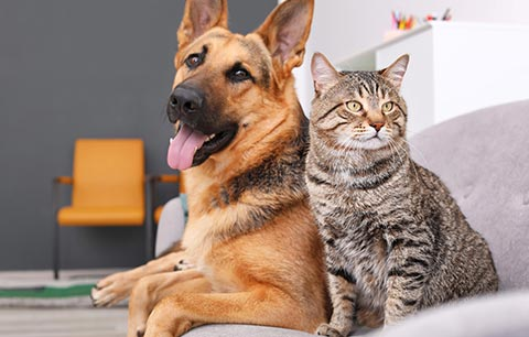 Your Guide to skin conditions in cats and dogs