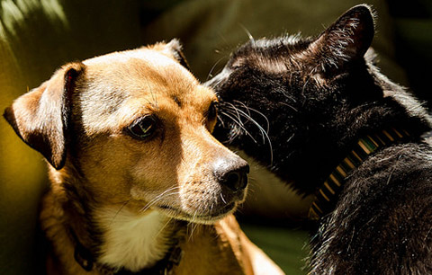 How to manage skin problems in cats and dogs