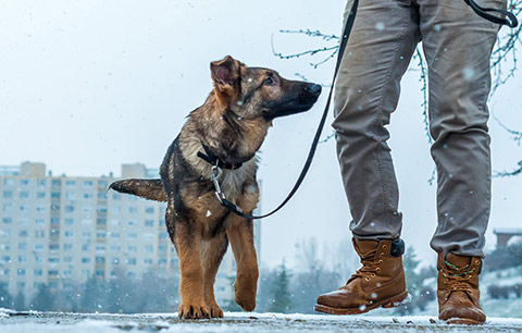 Our guide for protecting paws in winter