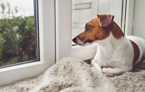 How to prepare your dog for when the Coronavirus lockdown ends