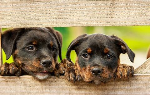 Why puppies and kittens need specific diets